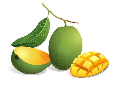 Realistic vector illustration of mangoes and a sliced mango. Ilustracja