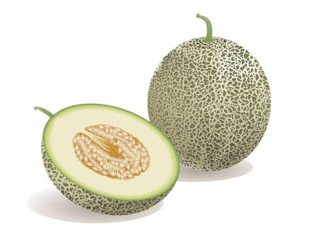 Realistische vectorillustratie van een meloen en een halve meloen. Vector Illustratie