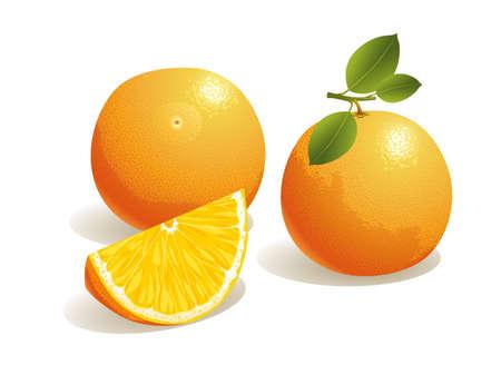 naranjas: Ilustración vectorial realista de una naranja y una porción de fruta naranja.