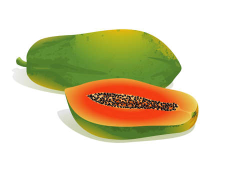 Realistic vector illustration of a papaya and a half papaya.