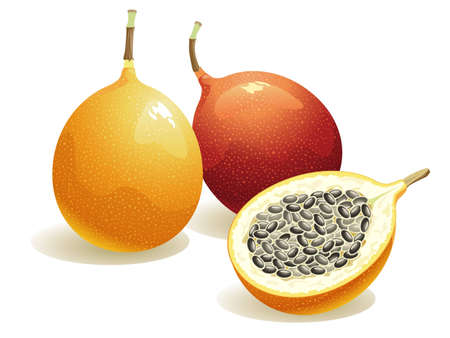 Realistic vector illustration of a passion fruit and a half passion fruit.  Illustration