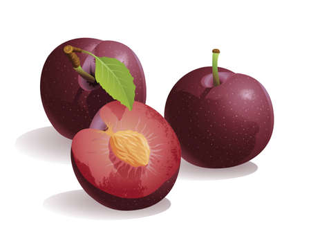 Realistic vector illustration of a plum or prune, and a half plum.
