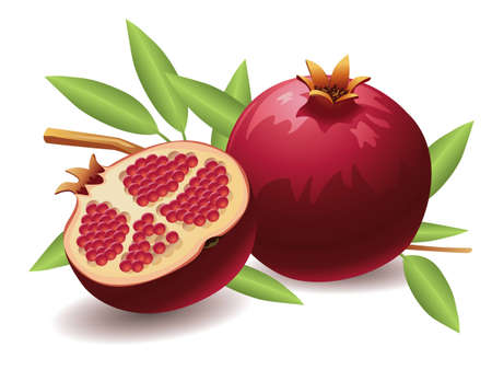 exotic fruits: Realistic vector illustration of a pomegranate and a half pomegranate. Illustration