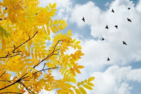 despedida: hojas amarillas y aves marchaban contra el cielo azul y nubes Foto de archivo