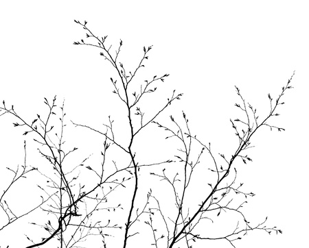 branches of a tree without leaves in spring on white background Stock Photo
