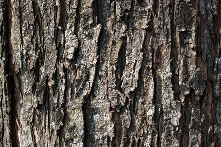 Detailed view of old tree bark texture