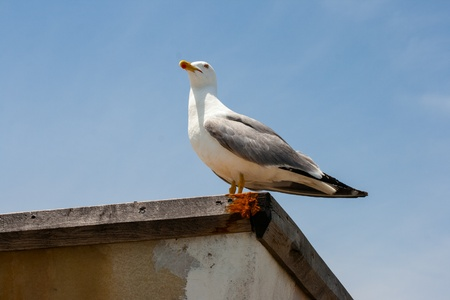 Lonely seagull photo