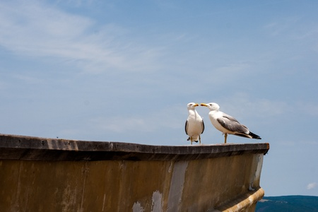 sea gulls photo