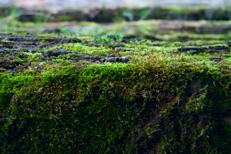 Bright green moss in the forest close up photo