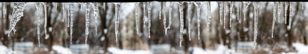 thawing: icicles which are hanging down from a roof. Isolated panorama on white with clipping path