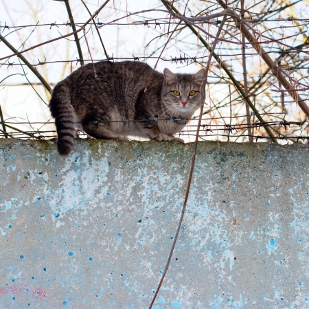 cat sitting on a concrete fence of barbed wire photo