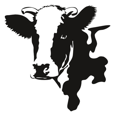 cow head: Vector illustration of a cow black and white