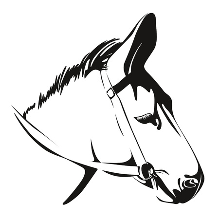 Head of Donkey  Black and White  drawing Vector