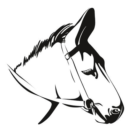 mula: Jefe de Burro Negro y blanco para dibujar Vectores