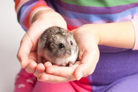 dwarf: Djungarian hamster in girl hand