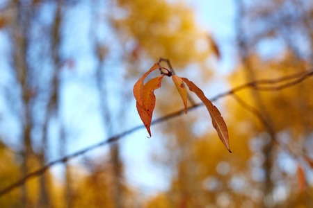 Last autumn leaf on a branch. Shallow depth of field photo