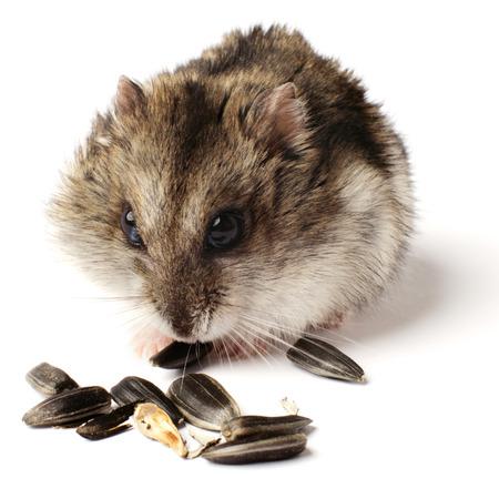 greedy: greedy little hamster