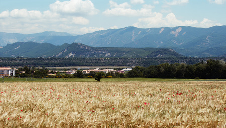 wheat field in the mountains of France photo
