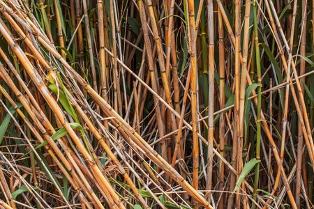 stalks: the Brown bamboo stalks background close up Stock Photo