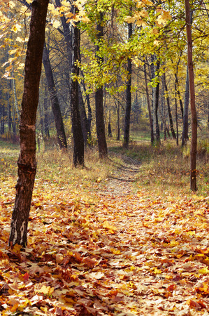 Autumn colors and changing season in a park, Belarus
