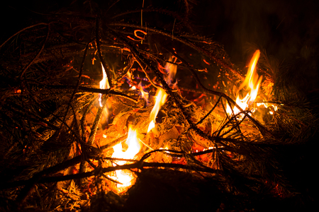 Bonfire in the forest tonight close up Stock Photo