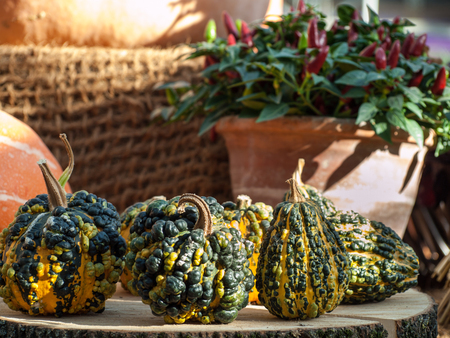 wart: Decorative pumpkins at the fall festival, vegetables Stock Photo