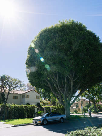 Los Angeles, USA - September 27, 2015: Mustang is standing under the shady tree on the street in Los Angeles, California.