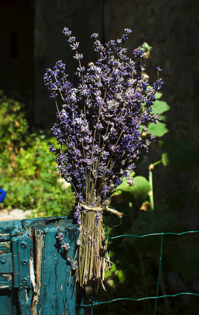 Lavender on dark background anywhere in Provence Stock Photo