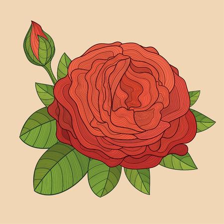 rosebud: Decorative isolated rose with bud. Vector illustration