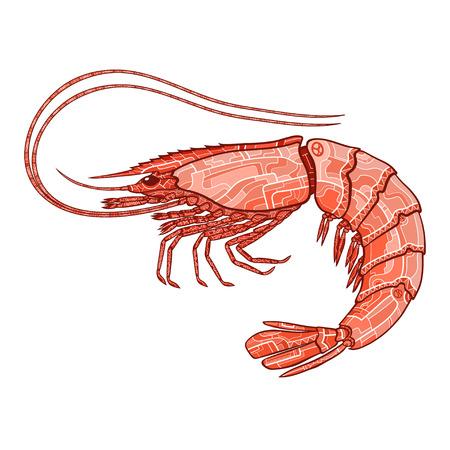 Decorative isolated shrimp on white background. Vector illustration