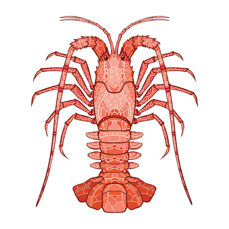 spiny: Decorative isolated crayfish on white background . Vector illustration. No gradients.