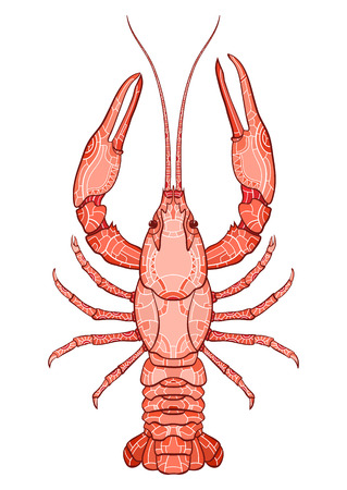 Decorative isolated crayfish on white background . Vector illustration. No gradients.