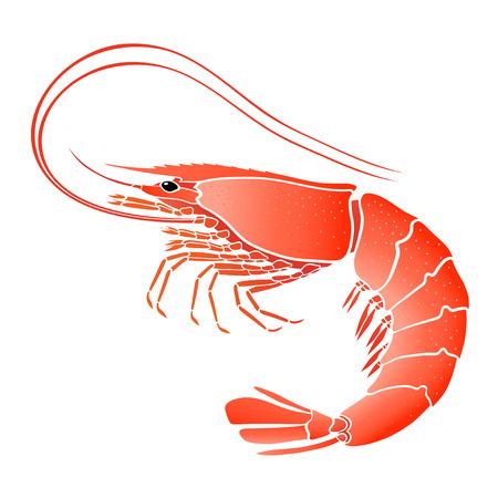 crevettes cuites isolé sur blanc Illustration Vecteurs