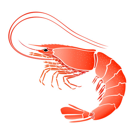 Cooked shrimp isolated on white illustration