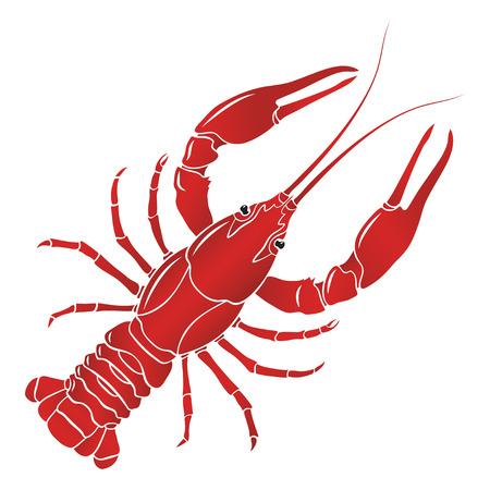 hervida cangrejo rojo, cangrejo de río en el fondo blanco.