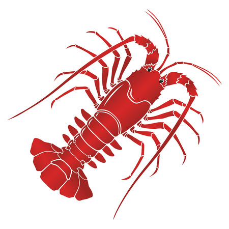 boiled spiny lobster or rock lobster on white background.