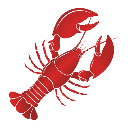 fresh seafood: Boiled lobster on a white background.