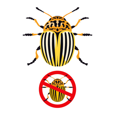 harm: Vector illustration of colorado potato beetle and and prohibition sign isolated on white background