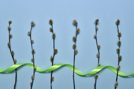 Spring rolls of the willow are spread vertically at the bottom parallel to each other and decorated with green satin ribbon on a blue background. Banco de Imagens