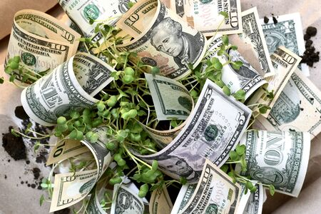 A bouquet of dollars and young greens through a hole in rough paper.