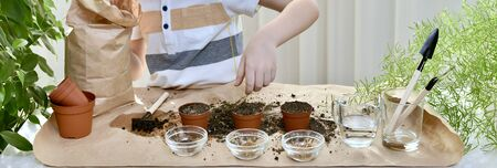 The child spills the soil from a handful of hands on top of the planted seeds in a pot, for planting micro greens of coriander, beets, cabbage. Indoors, in an organized work area.