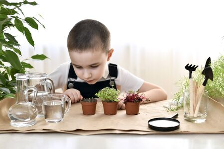 A seated child sits at a table with three pots of herbs and peers at the sprouts of coriander.