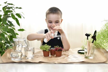 A little boy has fun looking after young sprouts of beetroot, coriander and cabbage. In an organized working atmosphere with gardening tools. Sprays water from the sprayer. The spray is flying by. Stock fotó