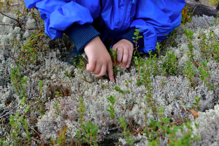 Child hands cutting off the found fungus. Pulls the hat and cuts the leg. On the ground covered with moss and grass.