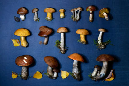 Laying taiga different mushrooms in three rows on a blue dark background, with leaves, moss and grass. Stock fotó