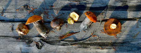 Different edible mushrooms, on a dilapidated wooden gray board.