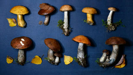 Two rows of forest mushrooms, freshly harvested. On a blue background. With elements of natural environment.