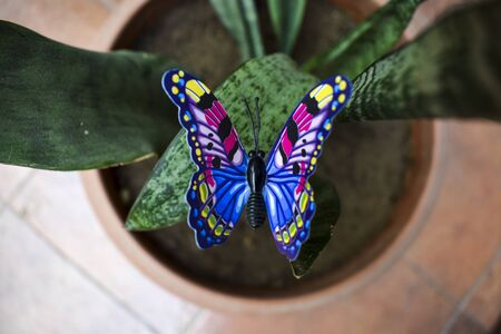 Cute blue and yellow diy butterfly, Artificial fake plastic butterfly on real spider ivy plant, Lawn decoration item butterfly 3d layered sticker. Artificial,fake,synthetic pot decoration