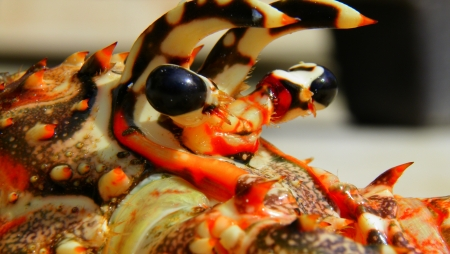 Close-up lobster photo