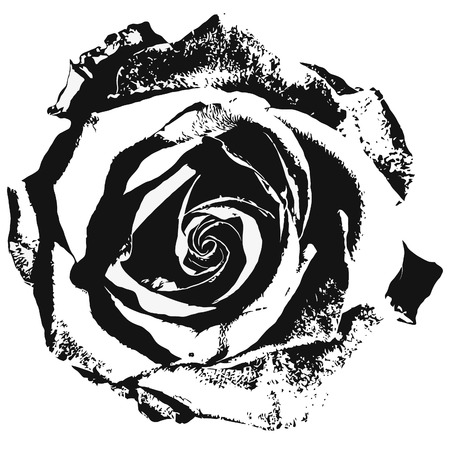 black and white image drawing: Stylized rose siluette black and white Illustration